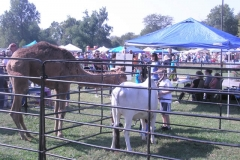 Fall Festival Petting Zoo